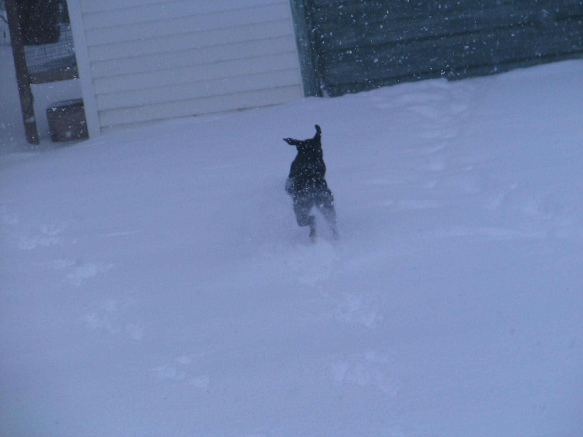 Ms Moxie playing in W.S Draco. :)-003.jpg