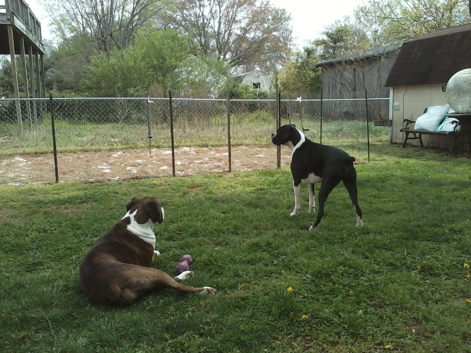My Girl Koko and My Boy Jaxson-0404161147-00.jpg