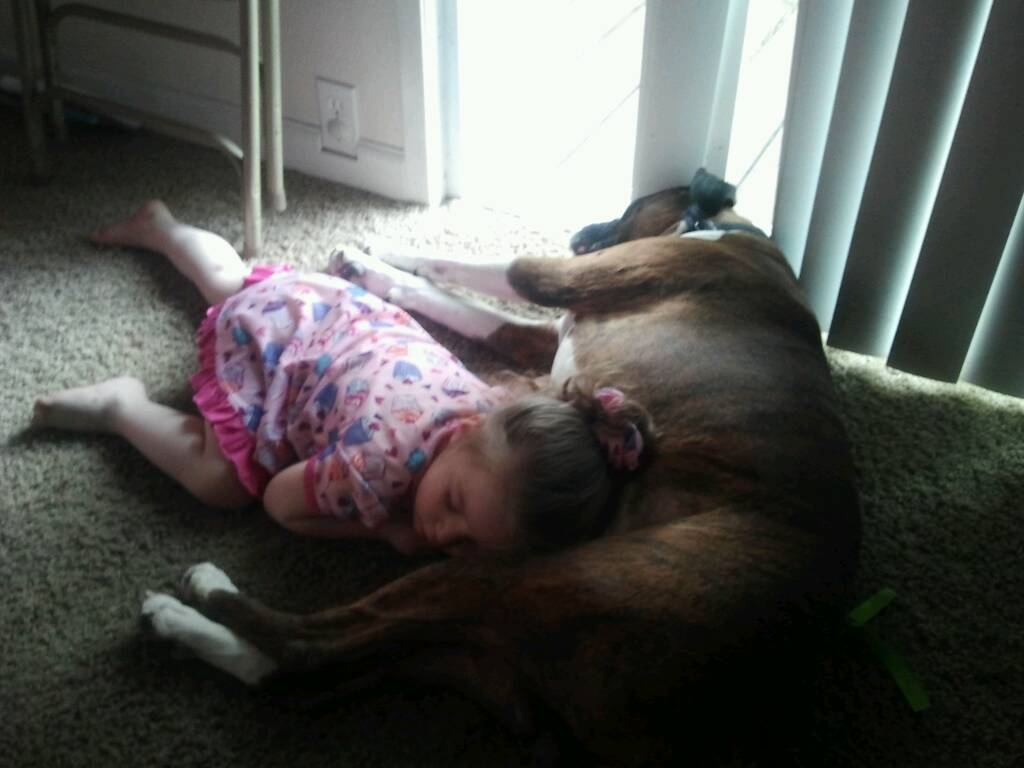 Thought you guys might like this pic shows how good boxers are with small kids-1367557761191.jpg