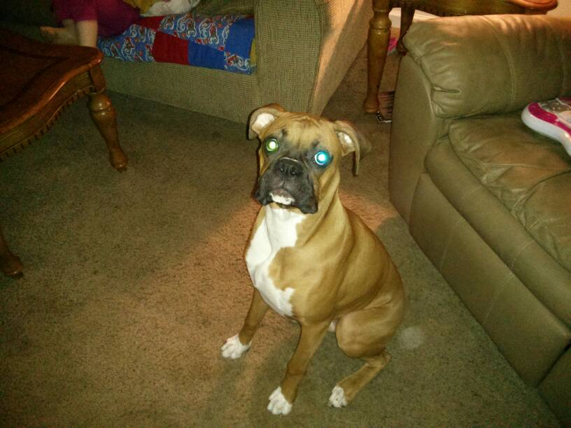 6 months old and 46 lbs?!? Holy Dog!-1383009278897.jpg