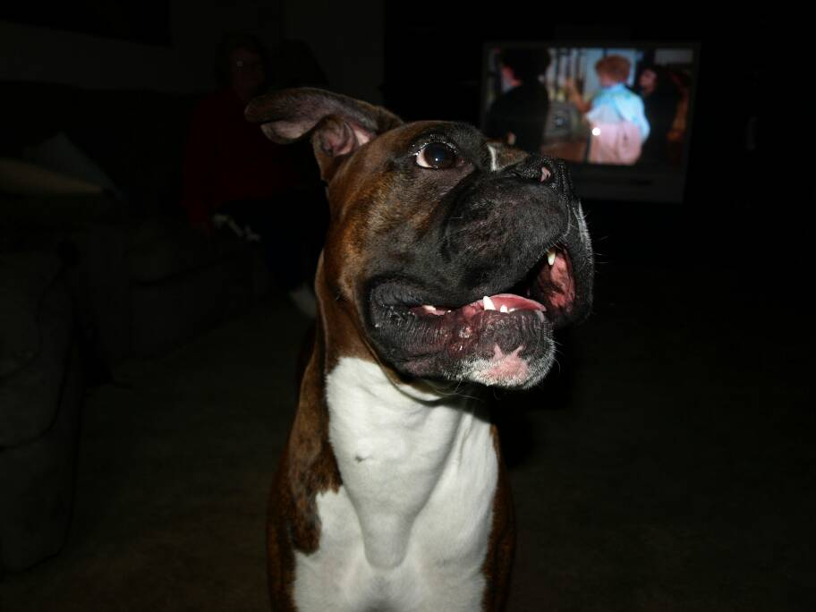 Some pictures of my best friend Duke (rip)-1385786305957.jpg