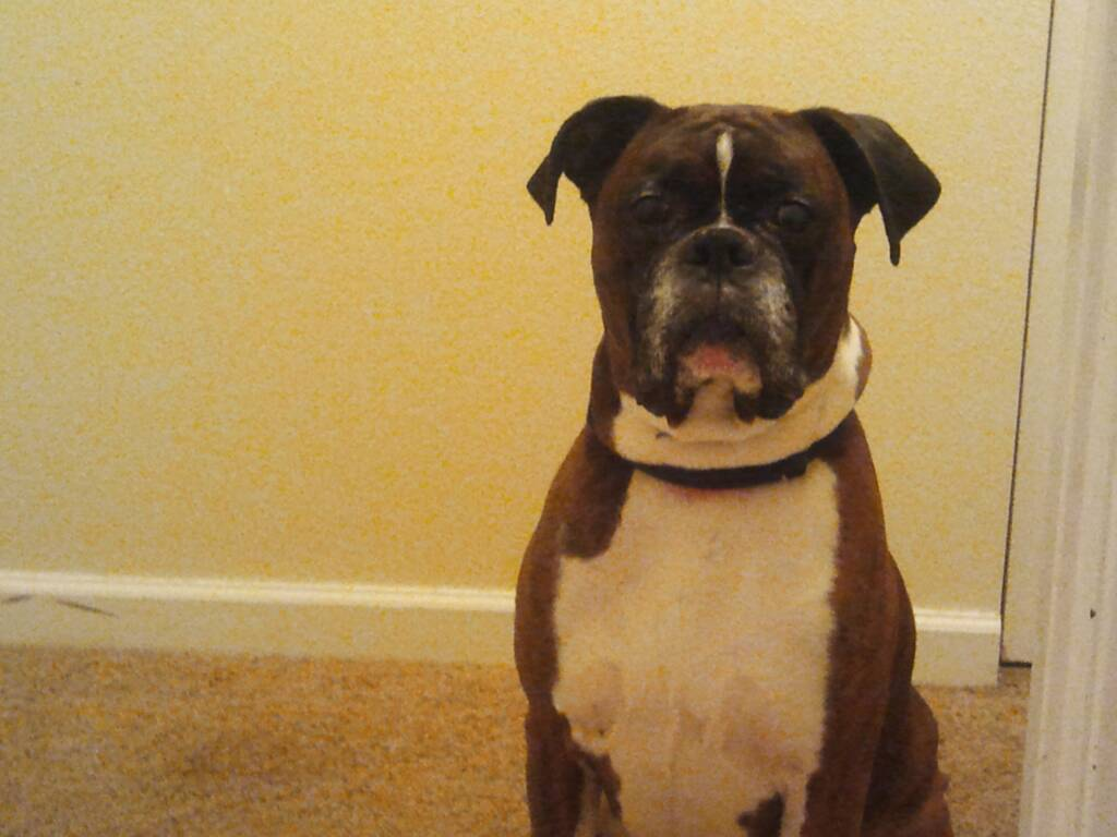 Some pictures of my best friend Duke (rip)-1385786758399.jpg
