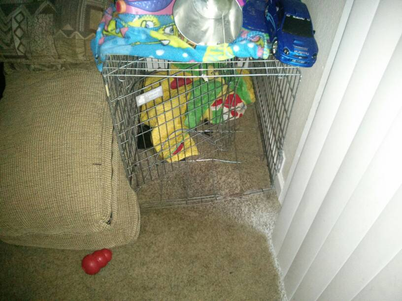 WTH I guess he hates his kennel-1387869579136.jpg