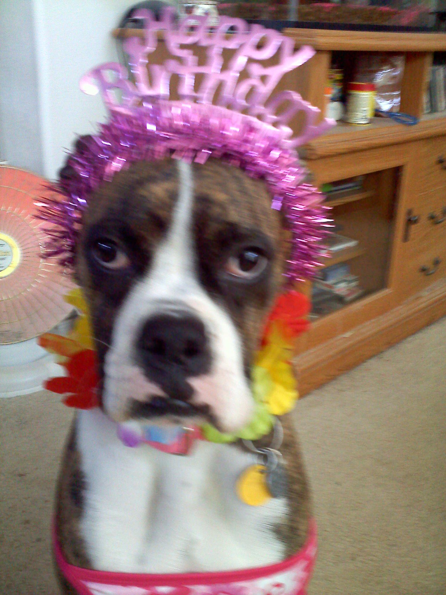 Happy Birthday Big Dog