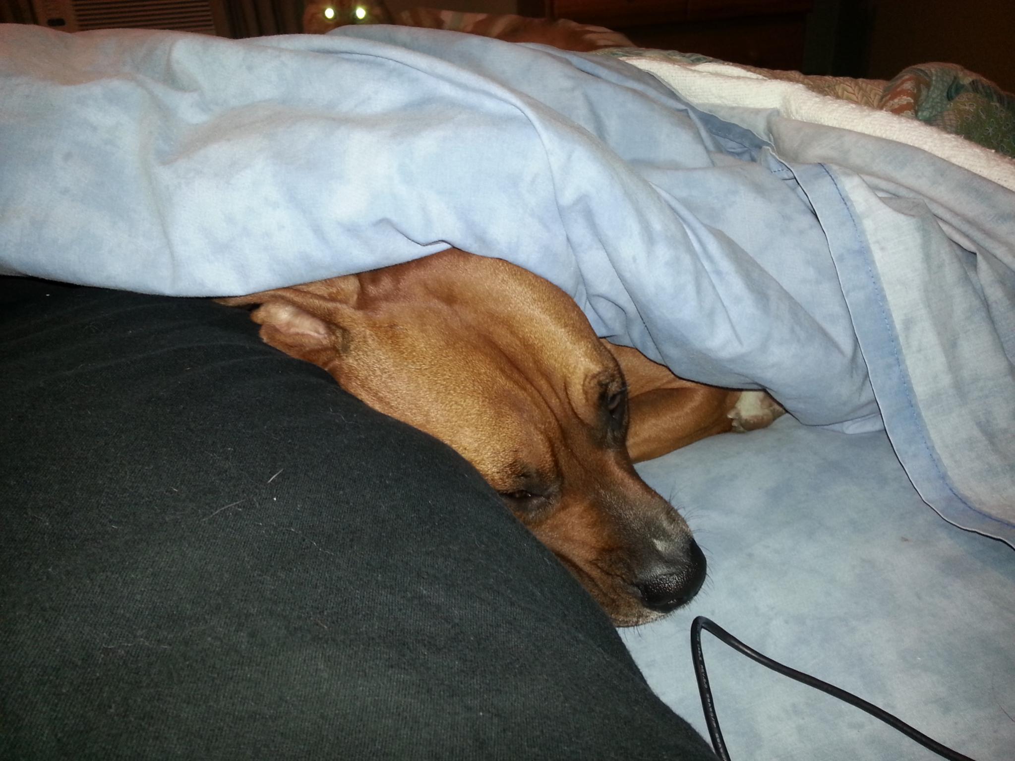 Pics of Sleeping Boxers Thread-20121025_212439.jpg