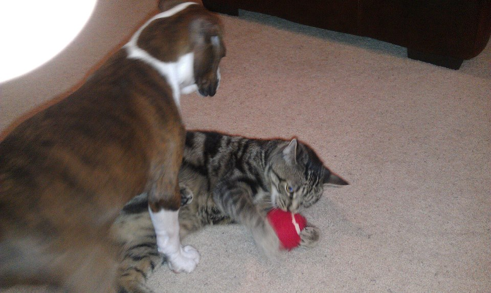Puppy vs Cat - HELP!-557546_4584774736067_1719339825_n.jpg