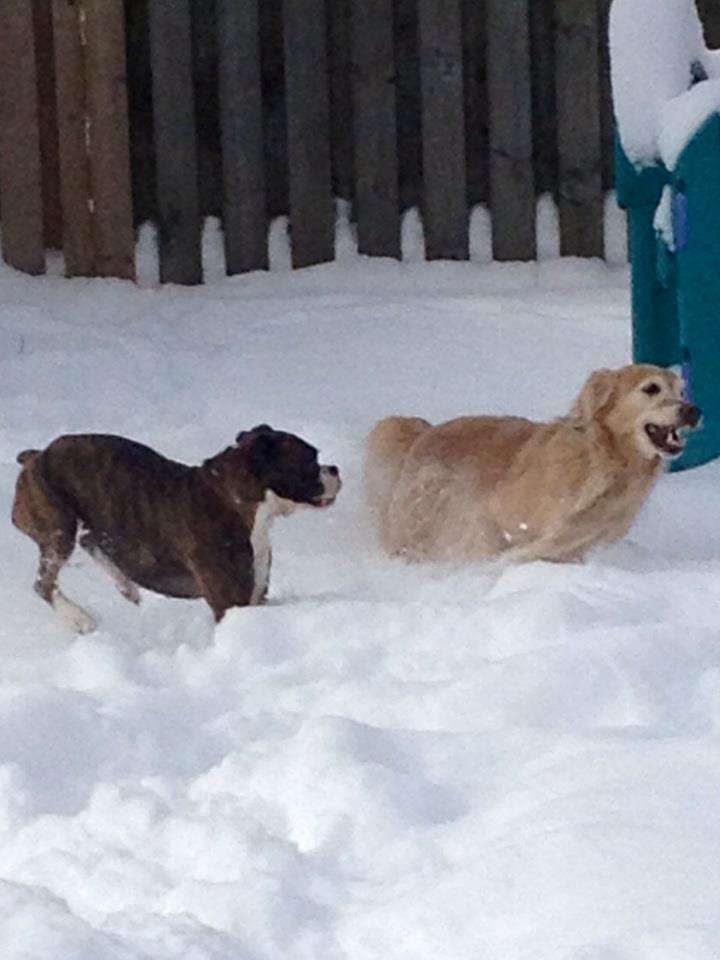 Breeze and Bentley enjoying the snow!!-ben-breeze-racing-.jpg