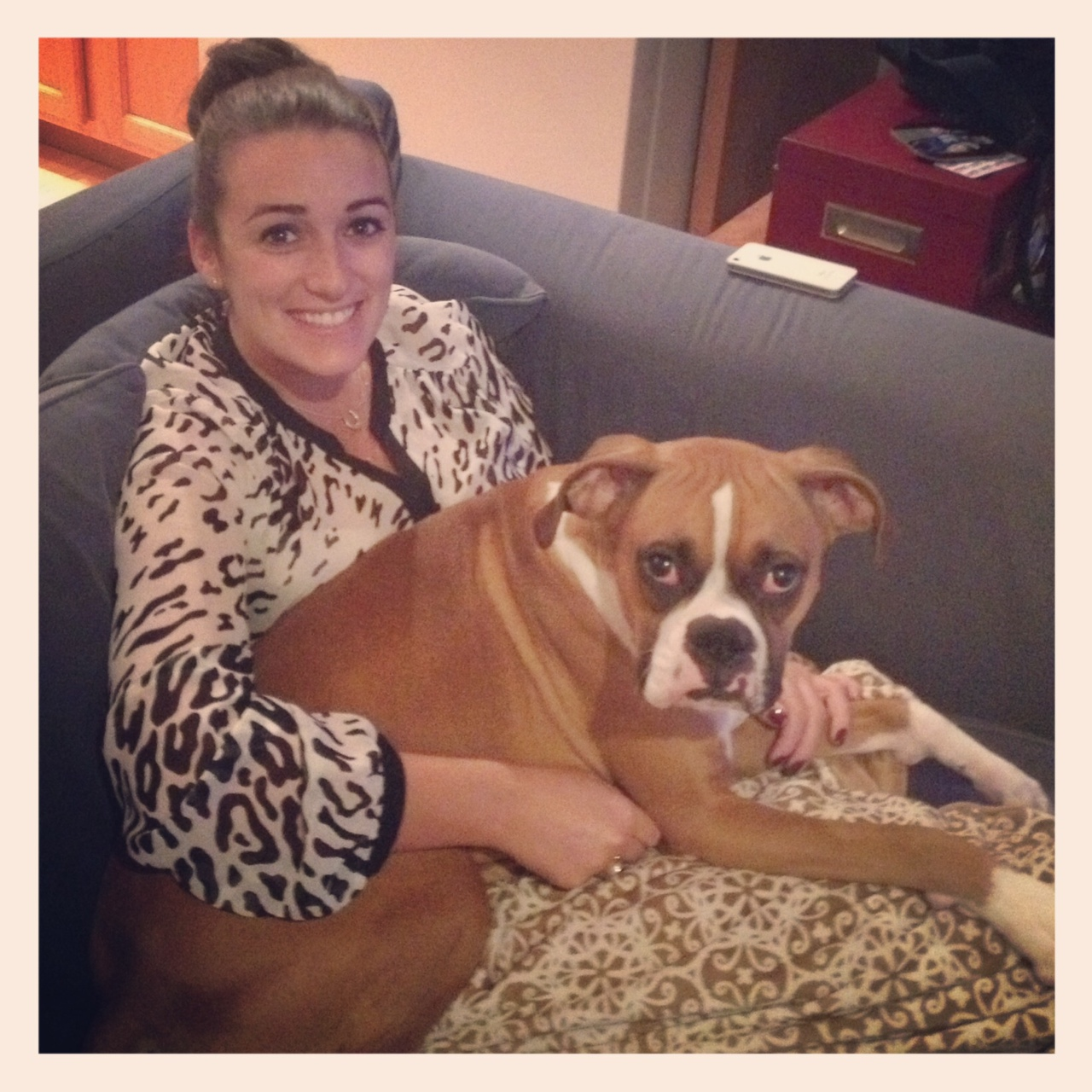 Boxer thinks she's a lapdog-bodie-lapdog.jpg
