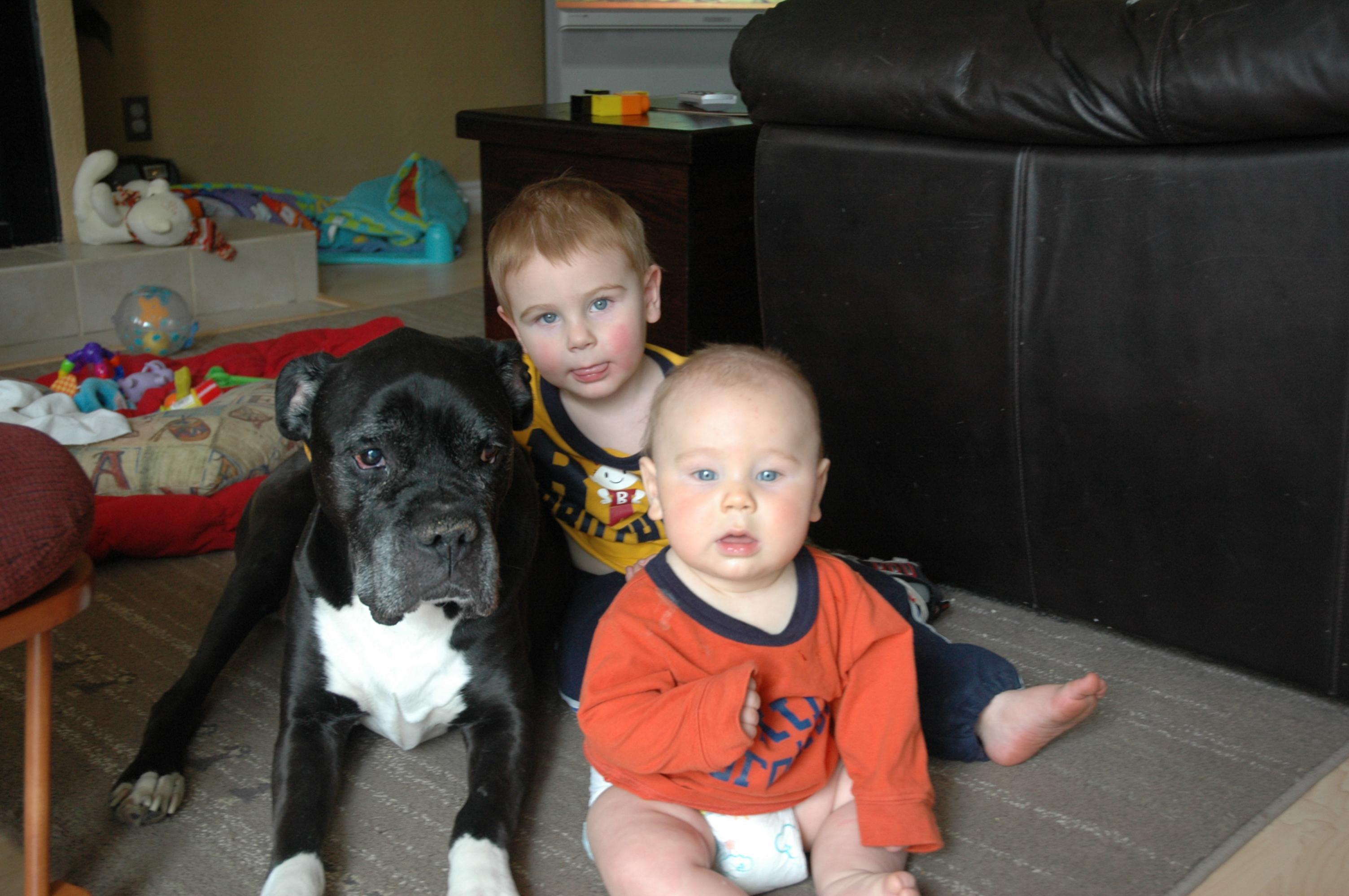Please Help! Looking for a breeder in Ontario-buster-003.jpg