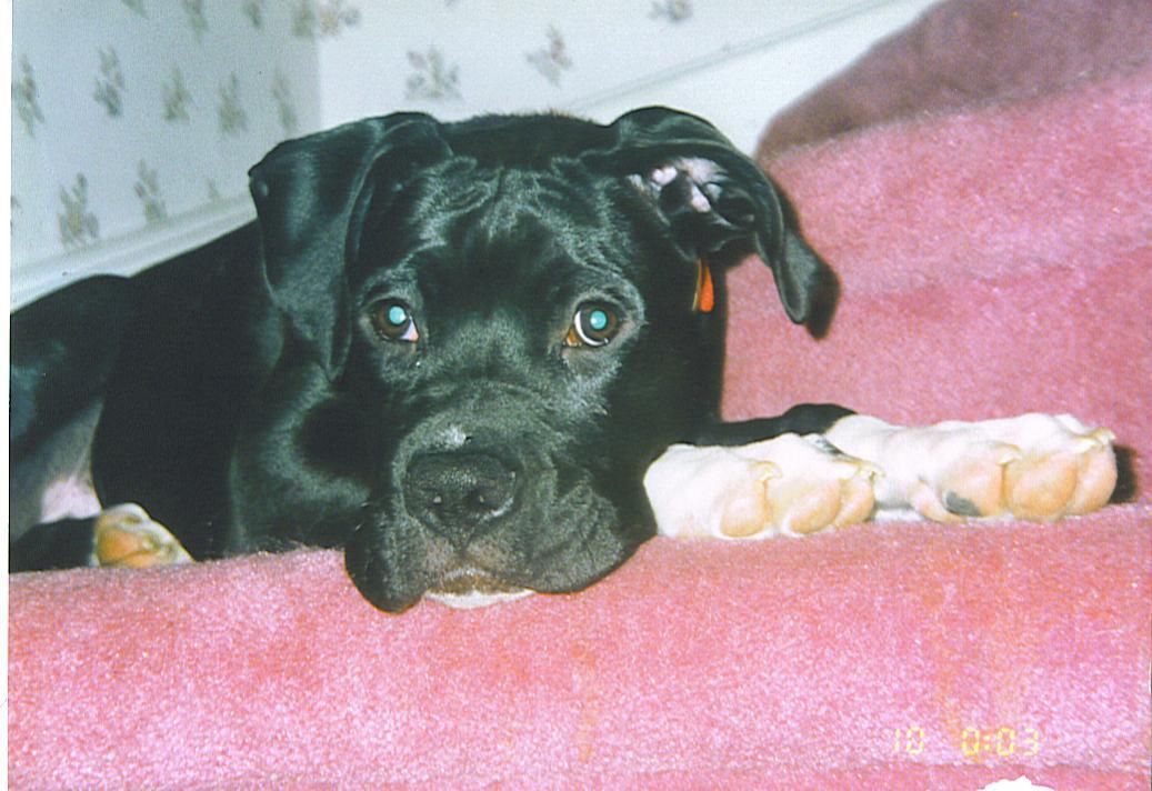 Please Help! Looking for a breeder in Ontario-buster.jpg