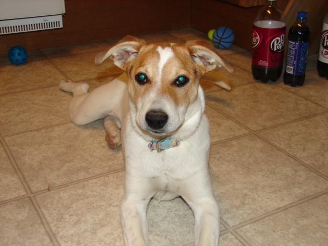 Identifying Dog Breeds Dog Breeds Picture | Dog Breeds Picture