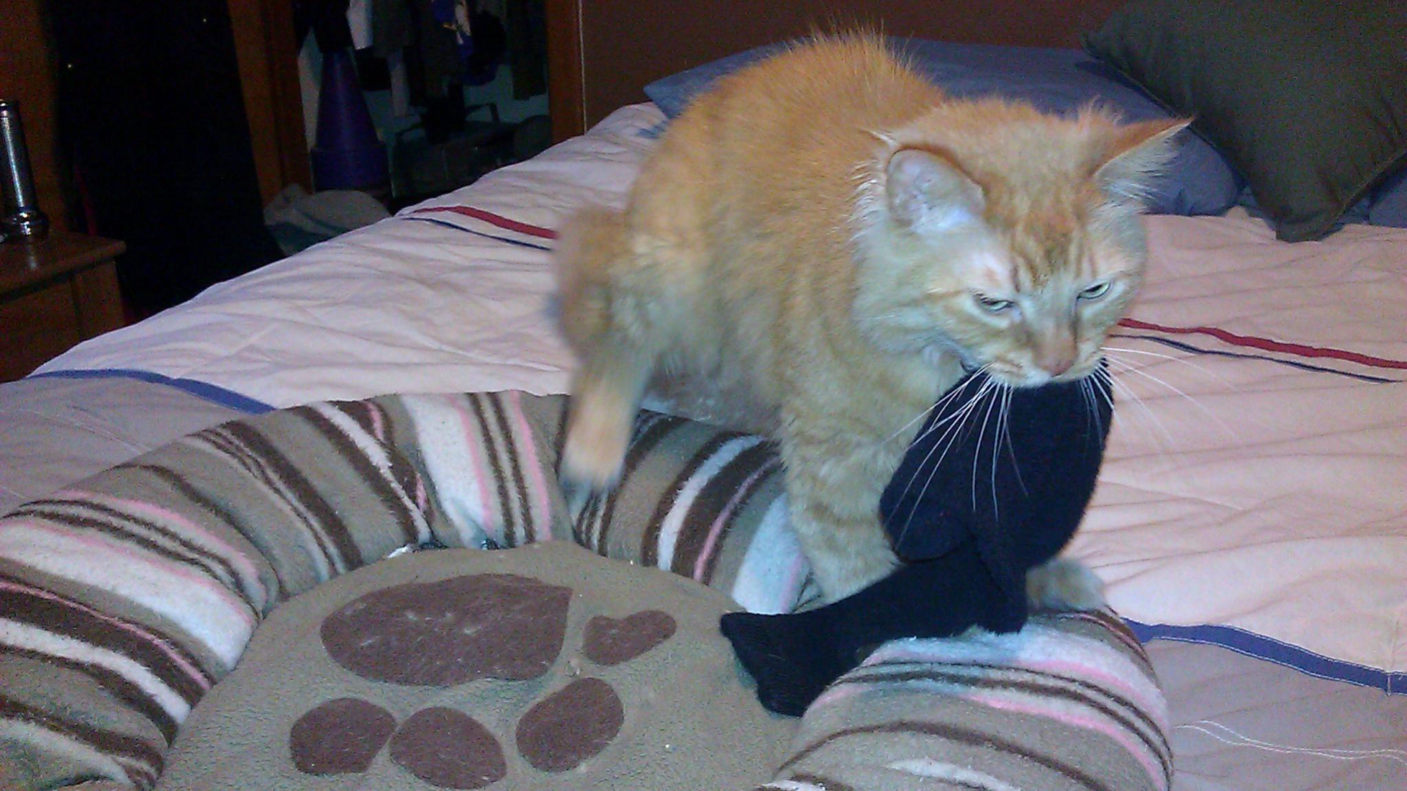 frisky cat-imag1785.jpg