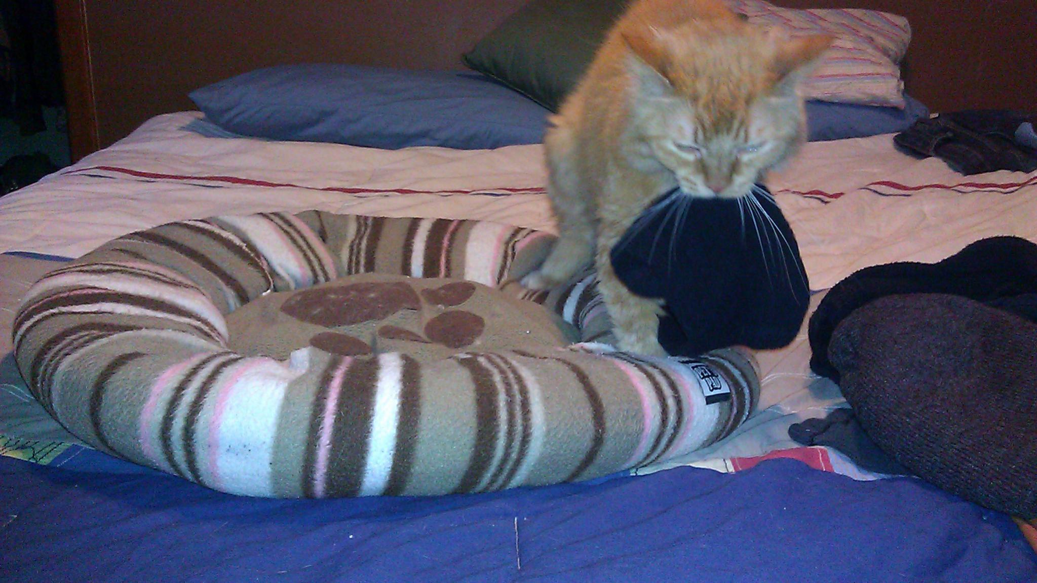 frisky cat-imag1787.jpg