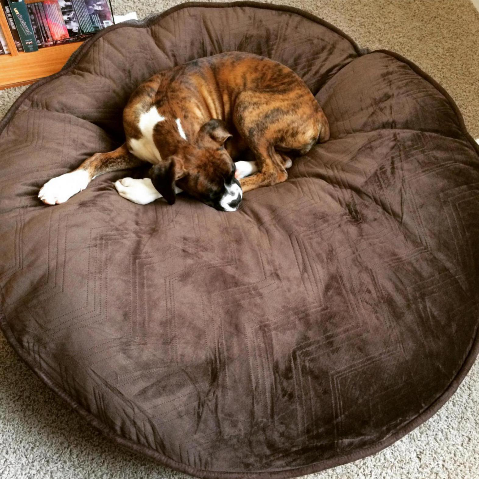 costco dog beds!! - boxer forum : boxer breed dog forums