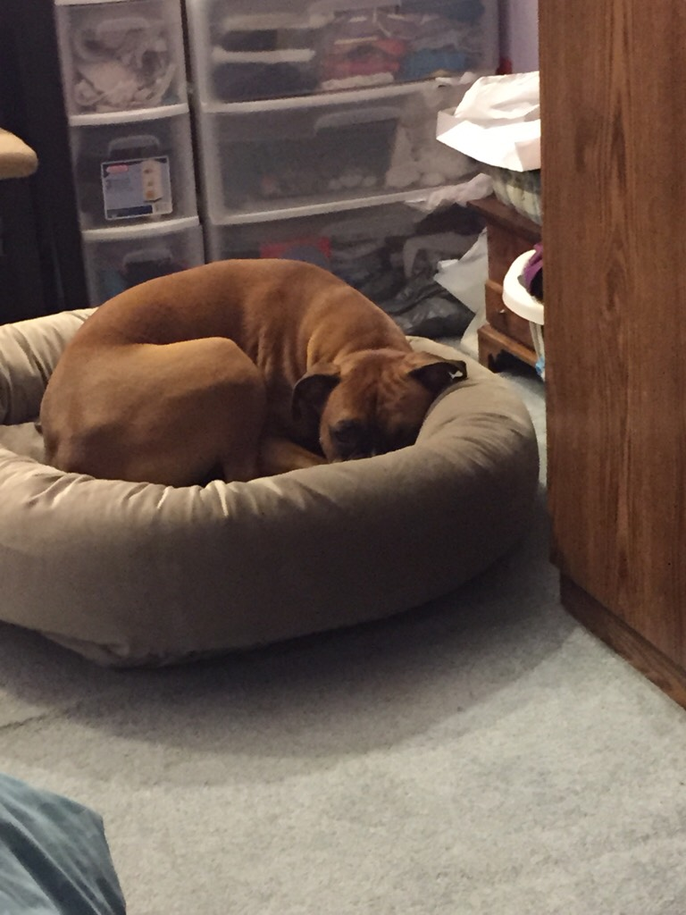 dog beds  page   boxer forum  boxer breed dog forums - attachment attachment attachment