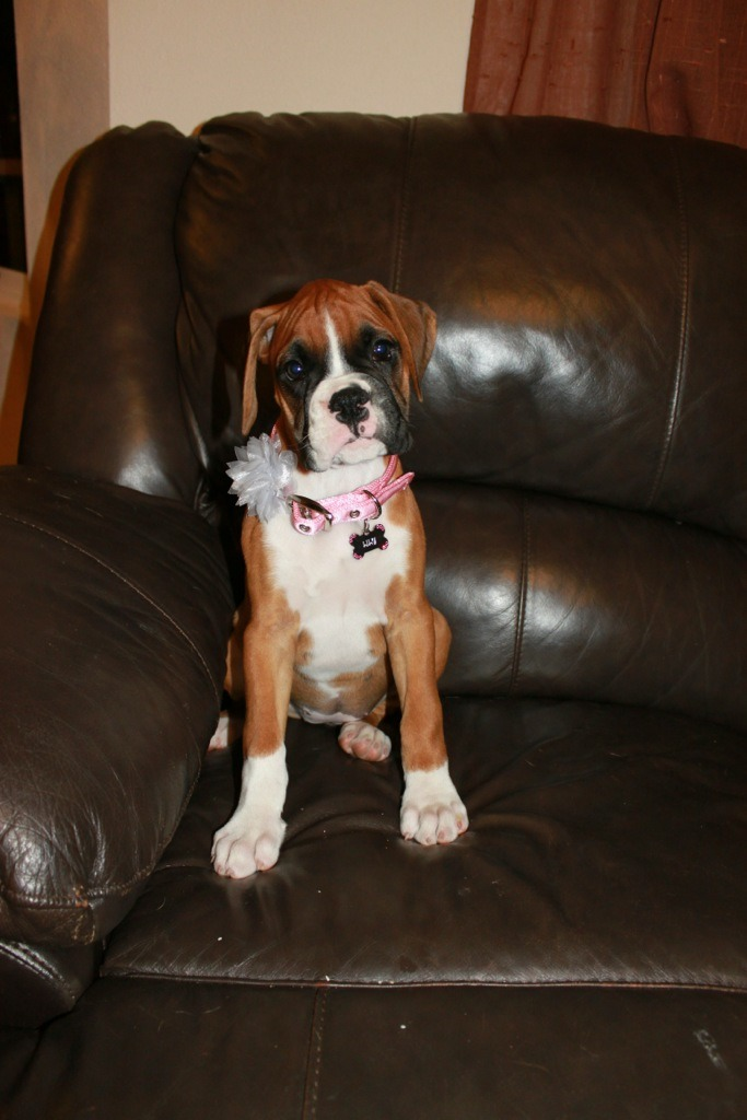 Lucy Update and new pics :)-imageuploadedbypg-free1353517873.981356.jpg