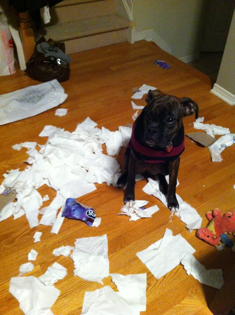Lexi loves Kleenex!-imageuploadedbypg-free1354036906.672741.jpg