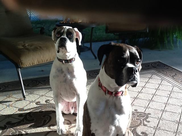 My babies-imageuploadedbypg-free1354084872.108309.jpg