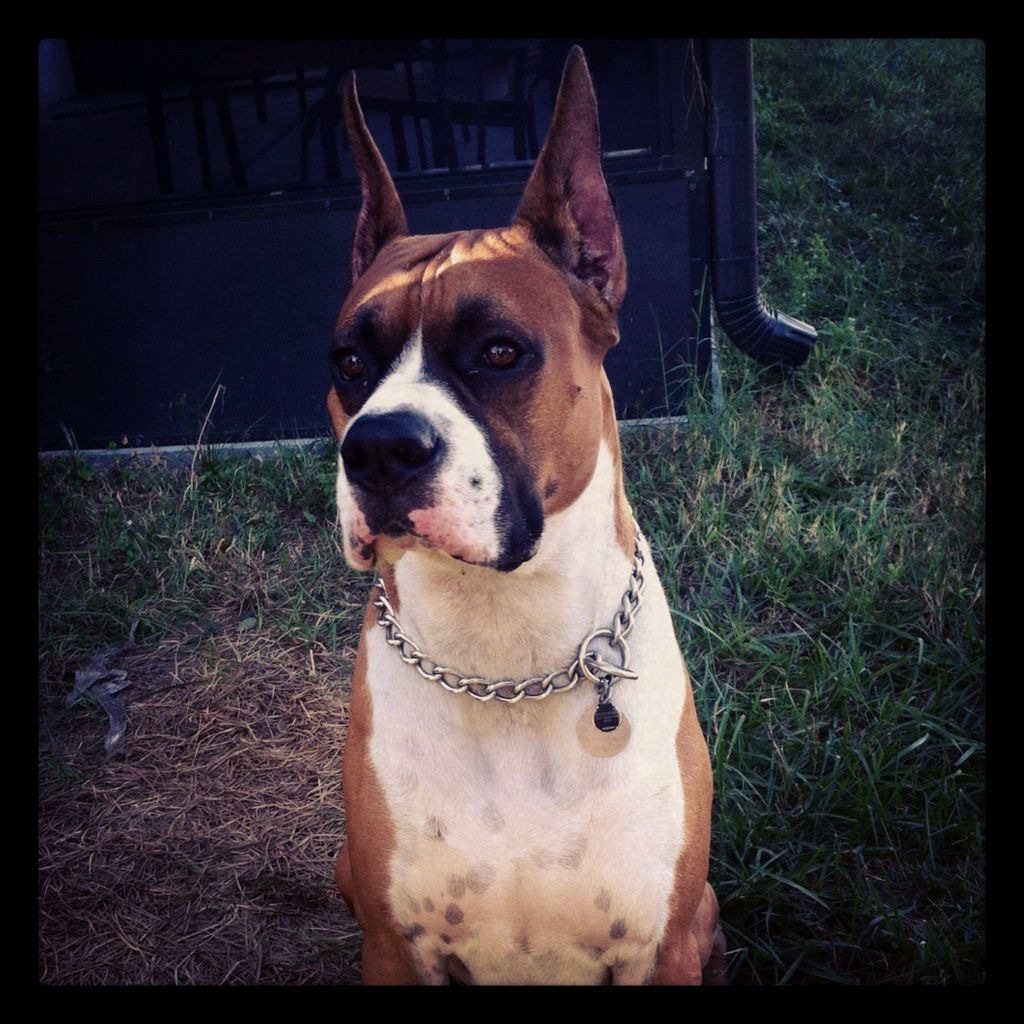 Apollo is 2 yrs old! (Pics)-imageuploadedbypg-free1354758765.187602.jpg