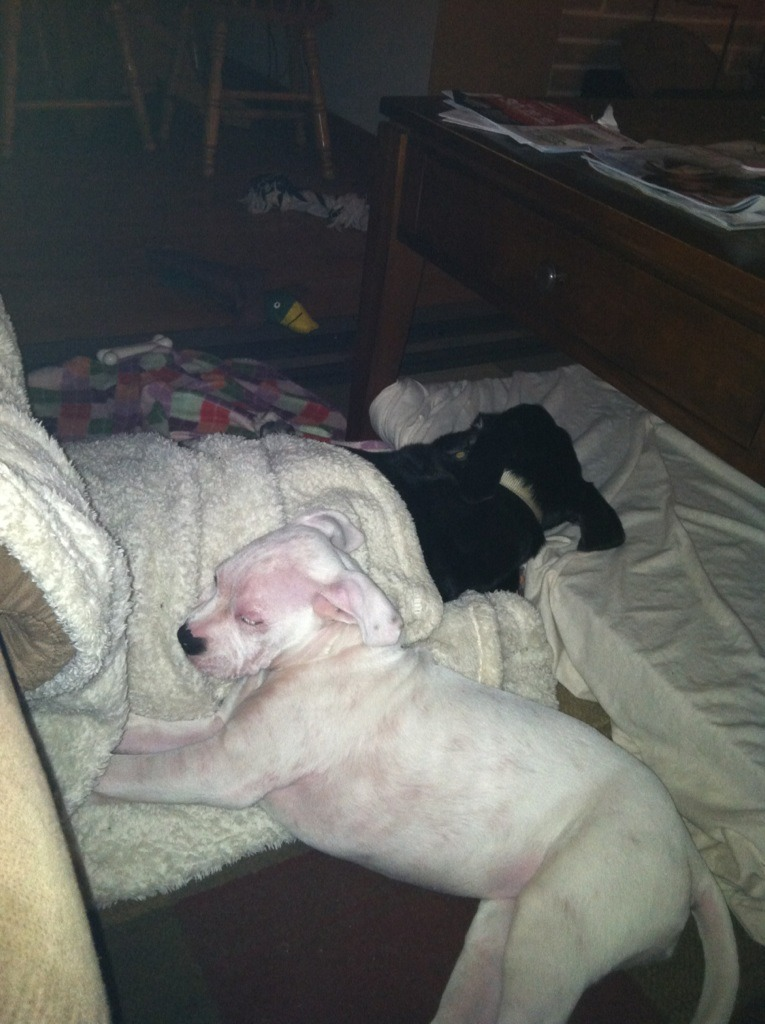 My white boxer puppy has redness..-imageuploadedbypg-free1355282583.807291.jpg