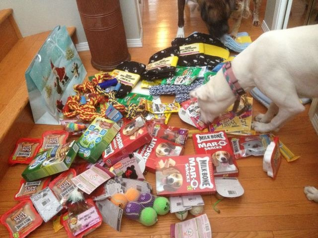 My Girls made their SPCA donation today-imageuploadedbypg-free1355435833.753864.jpg