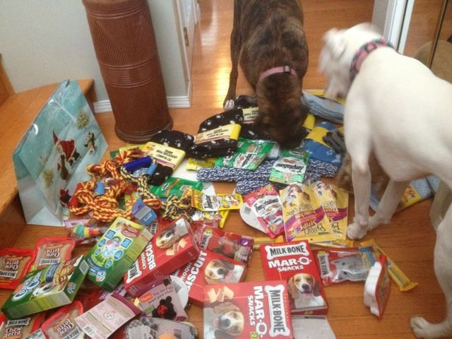 My Girls made their SPCA donation today-imageuploadedbypg-free1355435844.519357.jpg