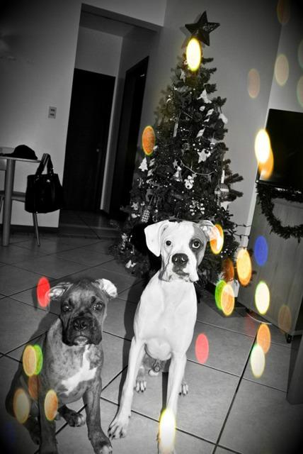 Raw + Christmas + my boys-imageuploadedbypg-free1355615551.045362.jpg