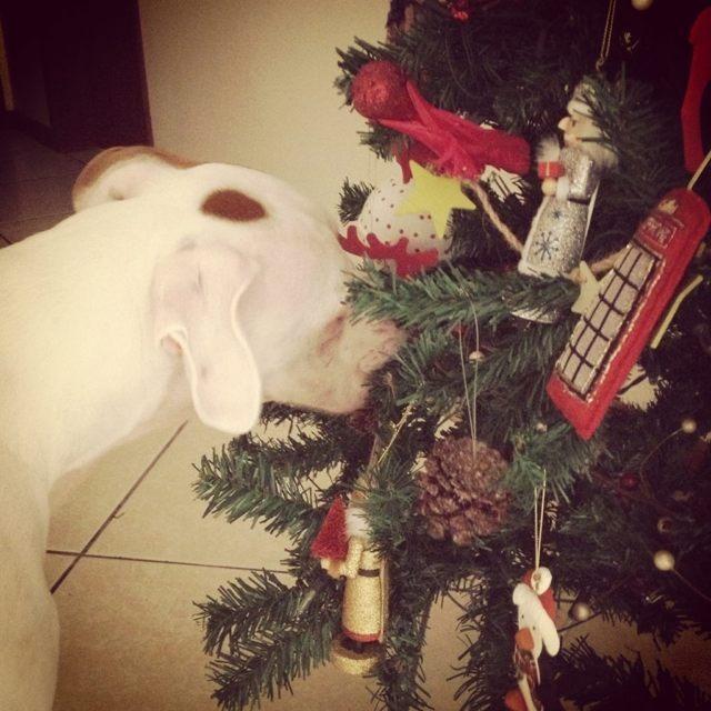 Raw + Christmas + my boys-imageuploadedbypg-free1355615576.206709.jpg