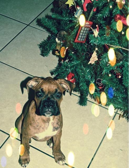 Raw + Christmas + my boys-imageuploadedbypg-free1355615595.545066.jpg