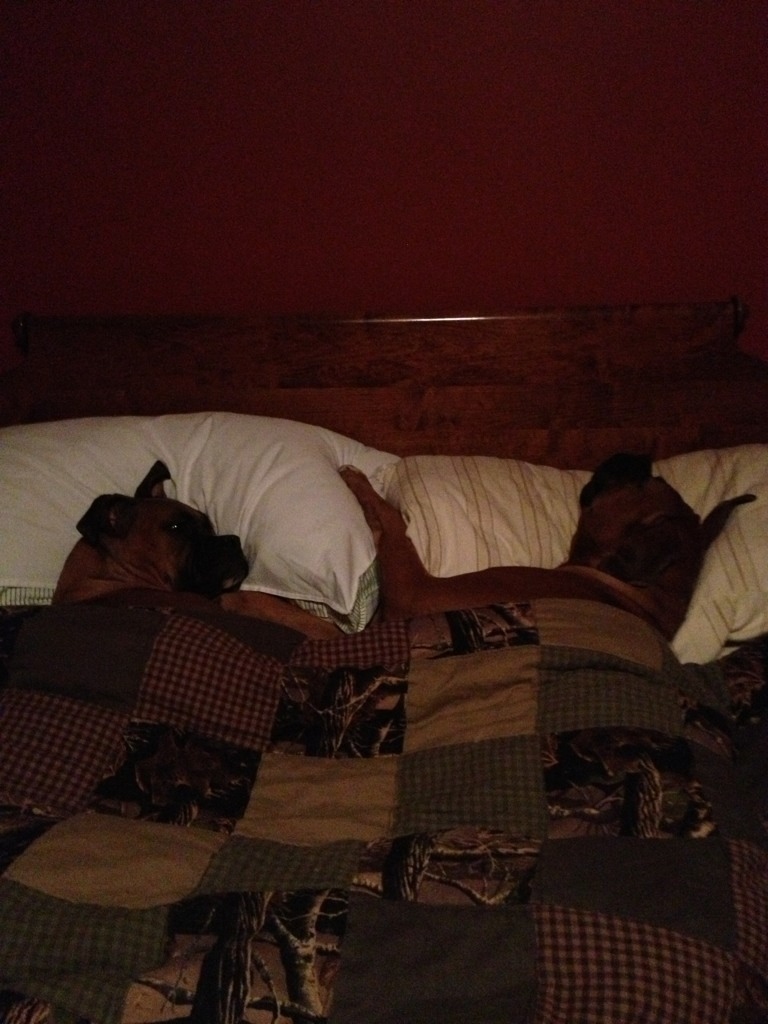 Pics of Sleeping Boxers Thread-imageuploadedbypg-free1355656909.989782.jpg