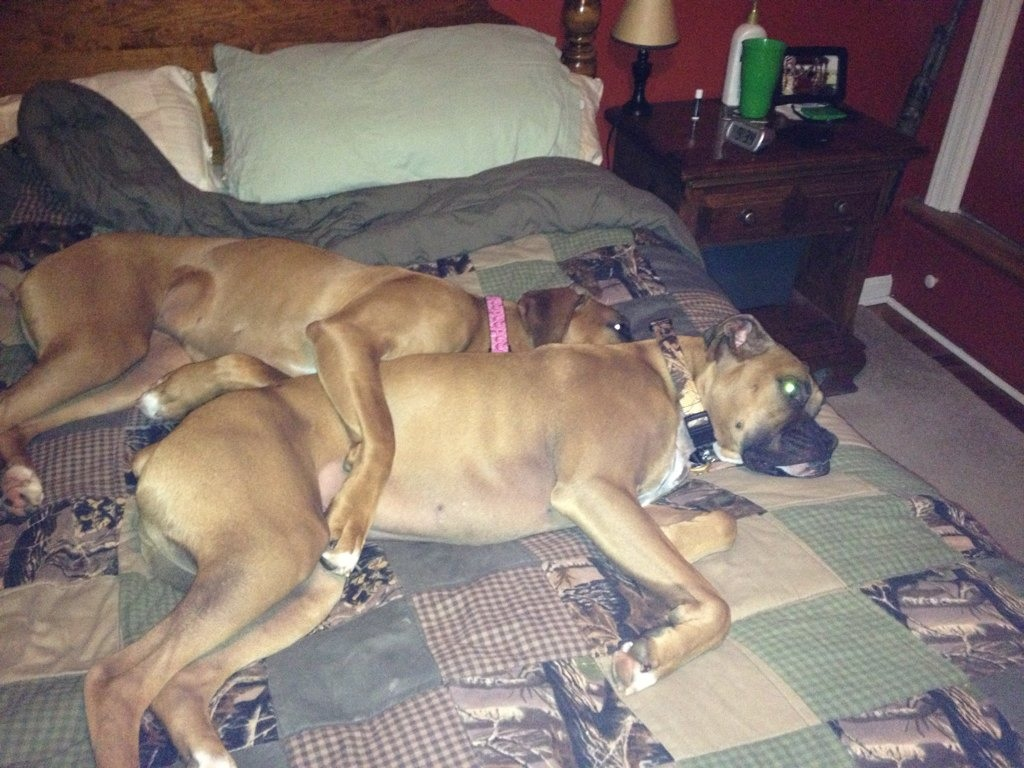 Pics of Sleeping Boxers Thread-imageuploadedbypg-free1355656957.632222.jpg