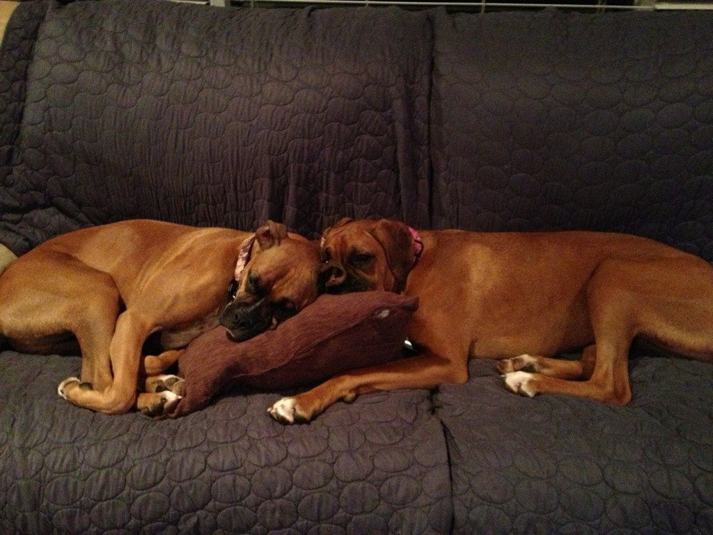 Pics of Sleeping Boxers Thread-imageuploadedbypg-free1355656989.067002.jpg