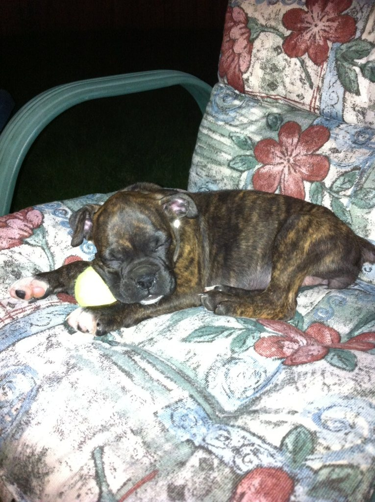 Pics of Sleeping Boxers Thread-imageuploadedbypg-free1355696622.290053.jpg