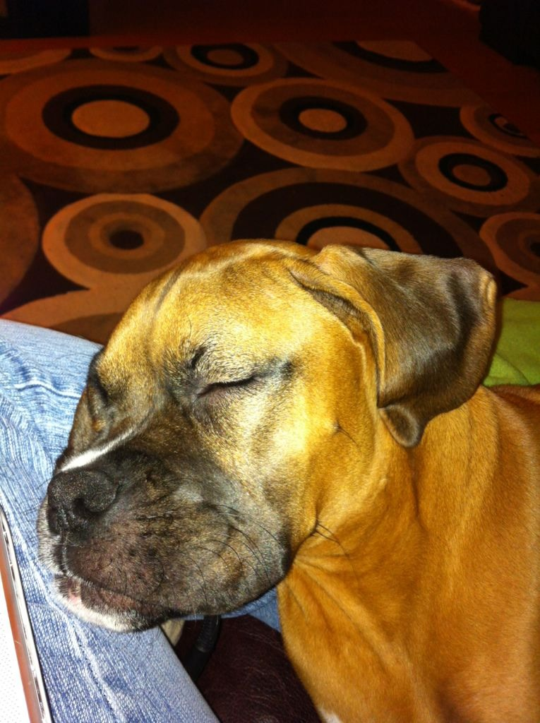 Pics of Sleeping Boxers Thread-imageuploadedbypg-free1355760152.196315.jpg