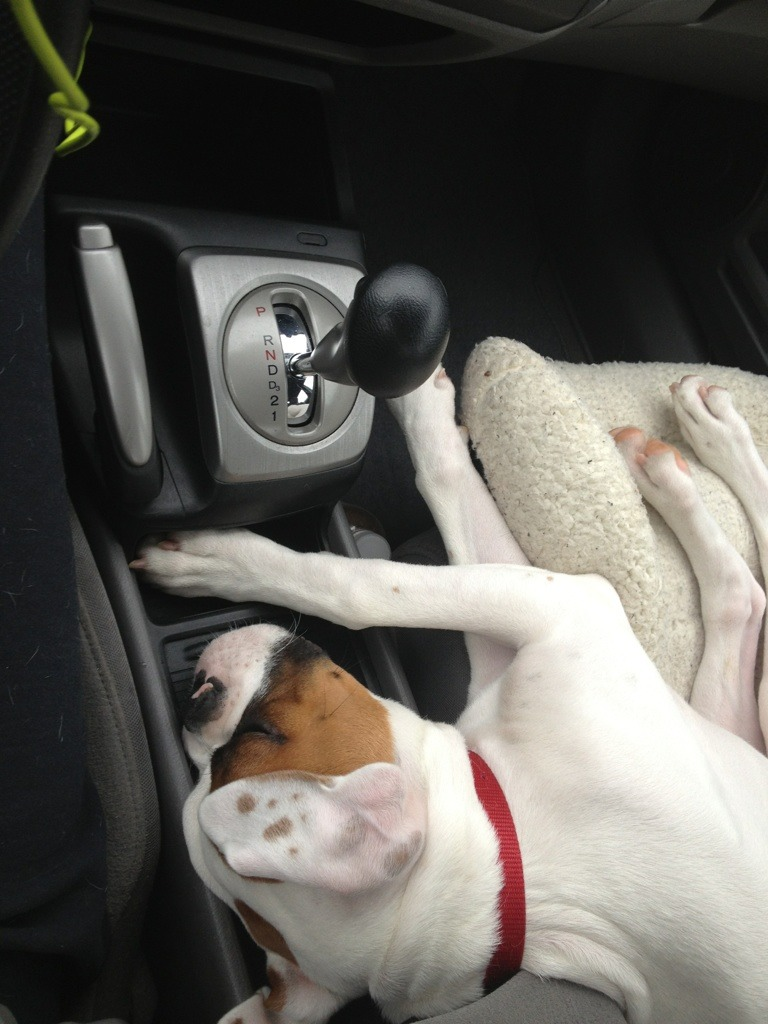 Pictures of Diesel traveling from GA to SC with mommy-imageuploadedbypg-free1355887475.155714.jpg