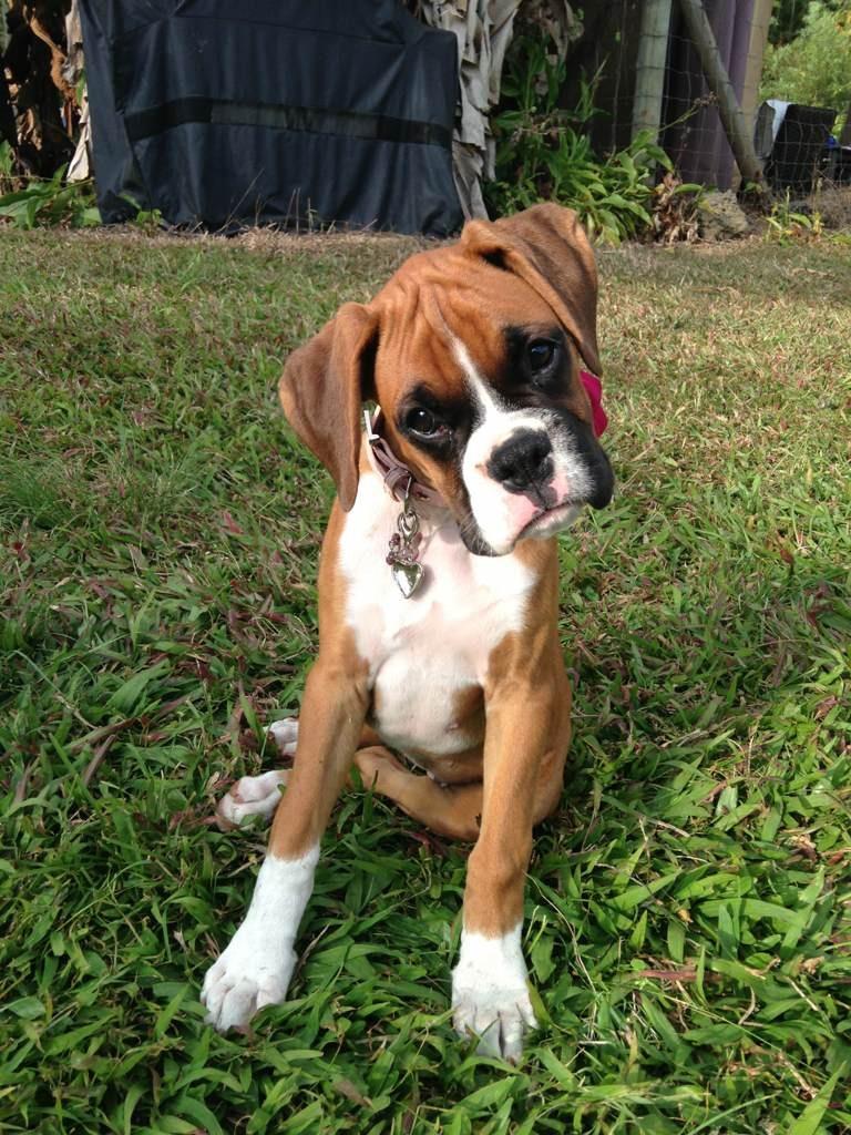 Stubborn me and stubborn vet...-imageuploadedbypg-free1355937248.876544.jpg