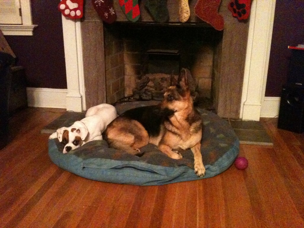 Diesel cuddling with Cheyenne :)-imageuploadedbypg-free1356099435.192680.jpg