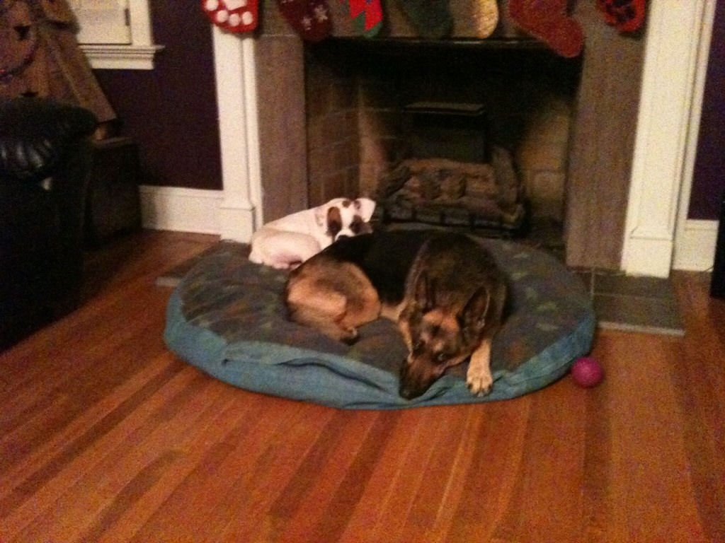 Diesel cuddling with Cheyenne :)-imageuploadedbypg-free1356099448.458960.jpg