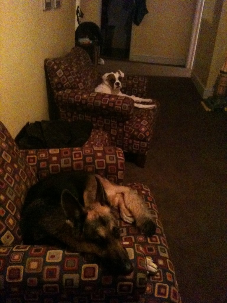 Diesel cuddling with Cheyenne :)-imageuploadedbypg-free1356099460.795153.jpg
