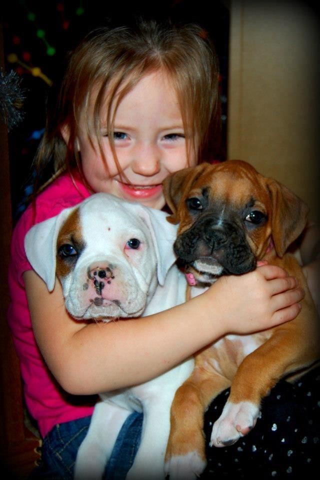 New Boxer Mom!-imageuploadedbypg-free1356107980.510201.jpg