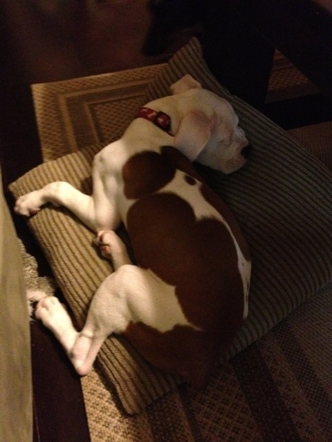 Frankie's snoozing-imageuploadedbypg-free1356229314.991911.jpg