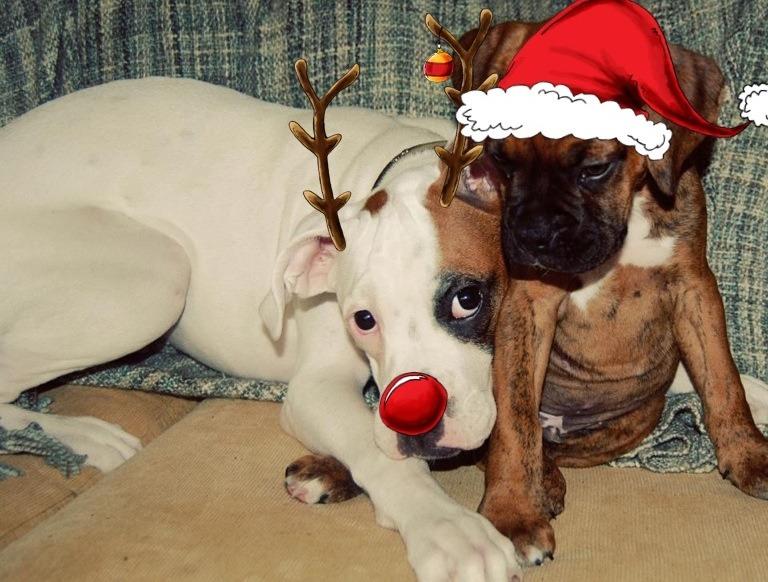Merry Christmas everyone-imageuploadedbypg-free1356372672.660742.jpg
