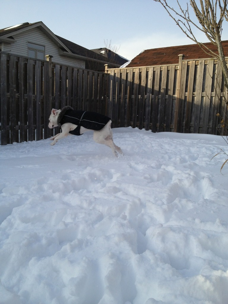 Our first Christmas with Cruz & his first major snow fall :)-imageuploadedbypg-free1356745623.194265.jpg
