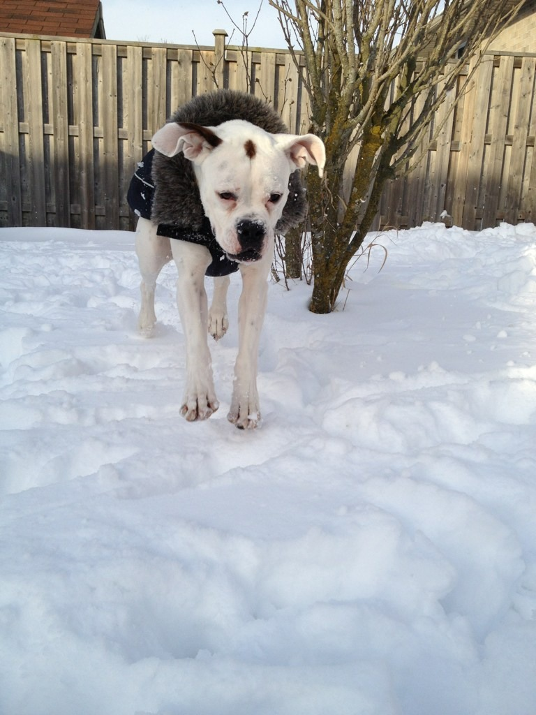 Our first Christmas with Cruz & his first major snow fall :)-imageuploadedbypg-free1356745768.080014.jpg