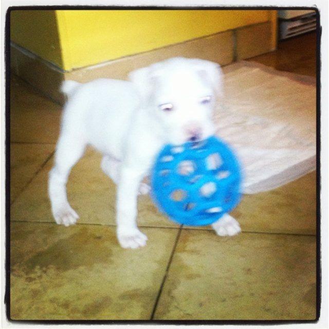 New boxer mom-imageuploadedbypg-free1357610155.784904.jpg