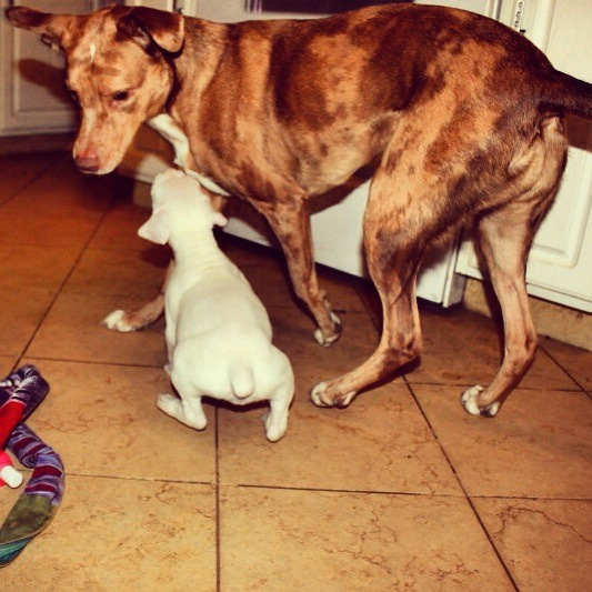 New boxer mom-imageuploadedbypg-free1357610211.303113.jpg