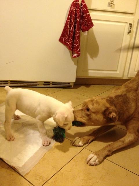 New boxer mom-imageuploadedbypg-free1357864253.010490.jpg
