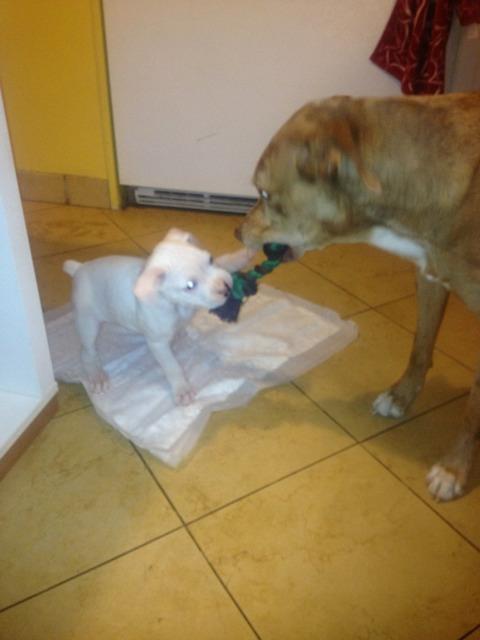 New boxer mom-imageuploadedbypg-free1357864274.894162.jpg