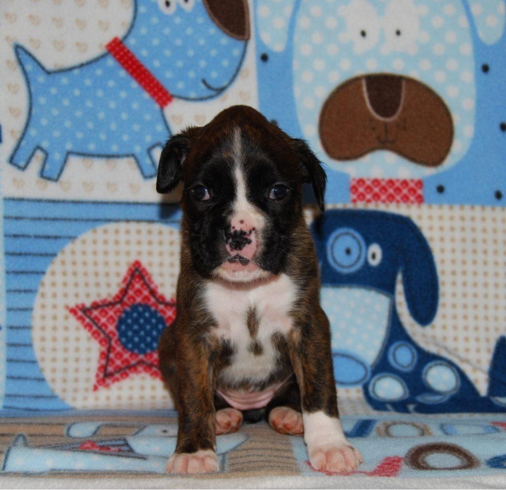 Our new baby girl-imageuploadedbypg-free1357964548.194578.jpg