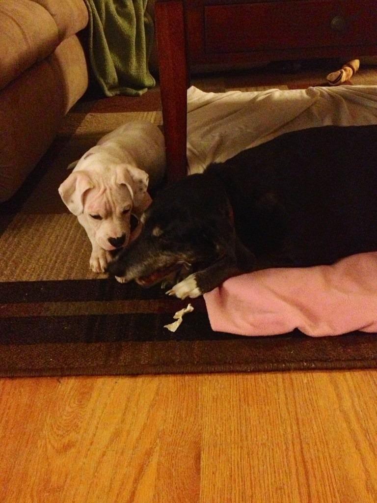 My fur babies.-imageuploadedbypg-free1358350972.613726.jpg